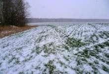 Карталинские фермеры сетуют: погода крестьянам нынче не товарищ