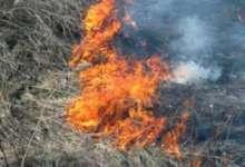 Окурок, сухостой и ветер стали причиной пожара