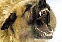 ПАМЯТКА населению при нападении (укусе) собаки