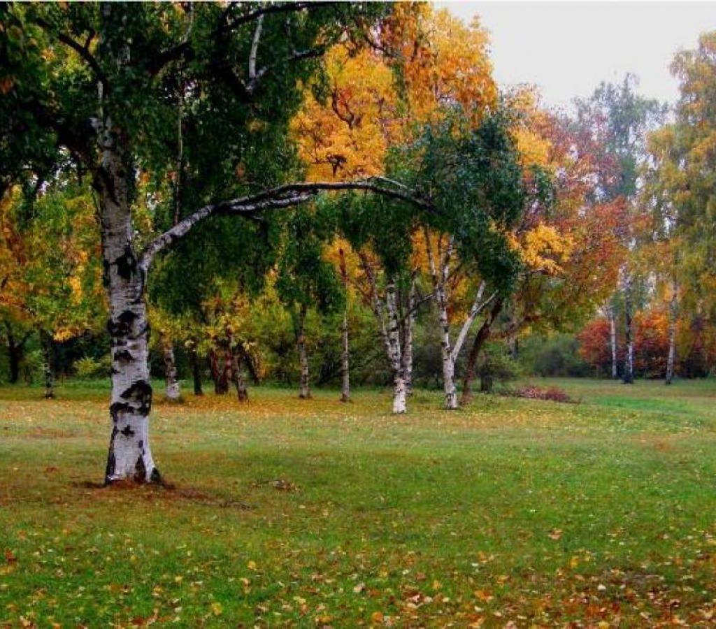 Осень ранняя золотая поздняя картинки для детского сада