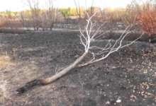 В карталинском парке пострадали насаждения