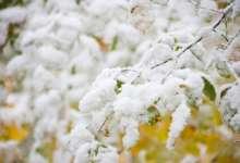 Карталинские синоптики все-таки обещают снег