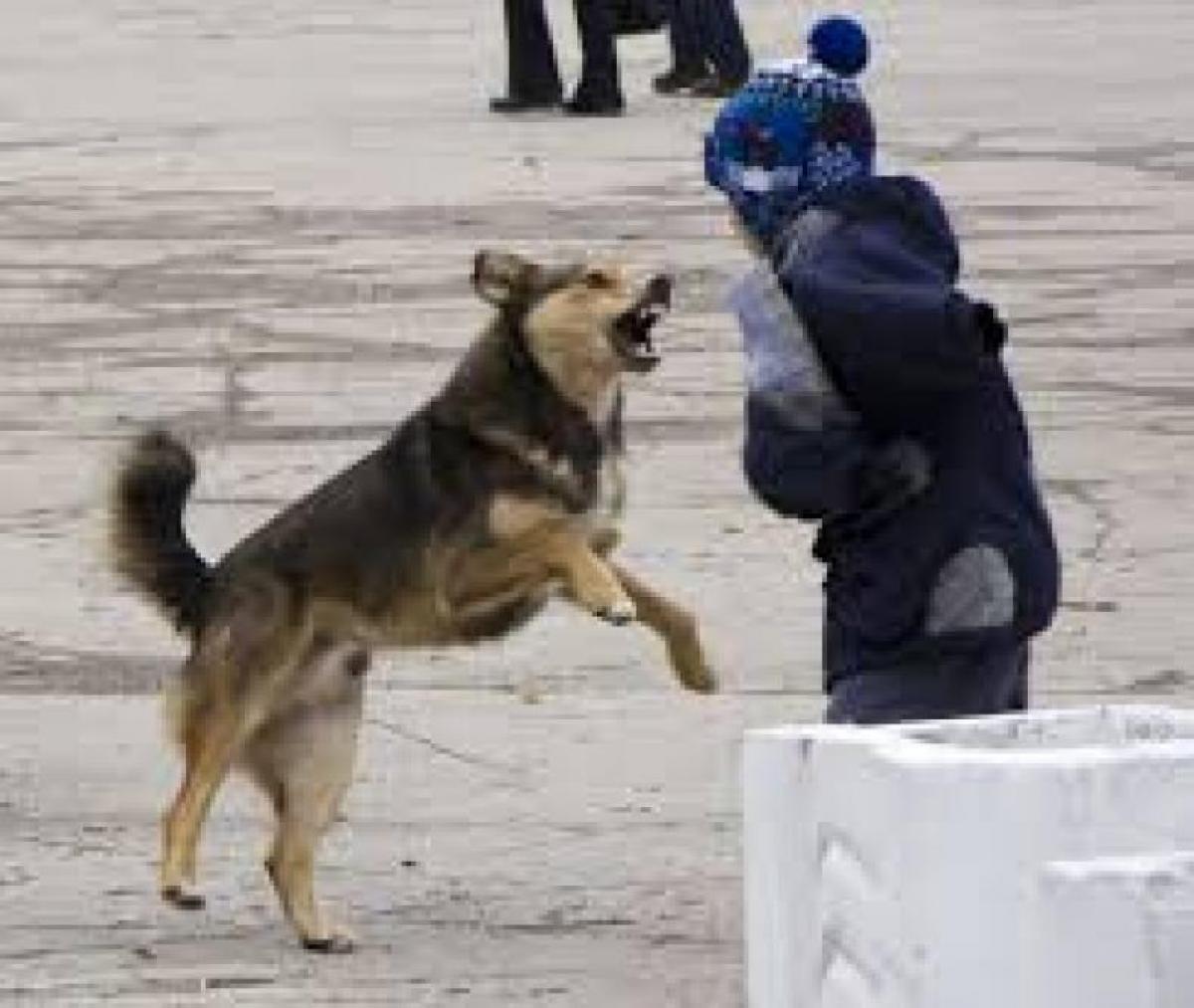 Карталинцы жалуются на собак