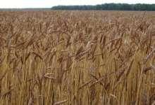 Южноуральские аграрии произвели сельхозпродукцию на 90 миллиардов рублей