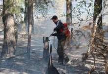 В Карталинском районе горит лес