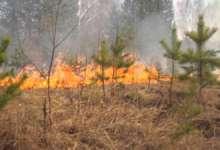 В Карталинском районе горят леса