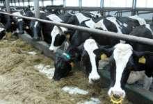 Поддержка развития молочной отрасли