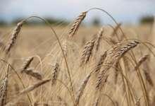 Дожди не помеха карталинским аграриям