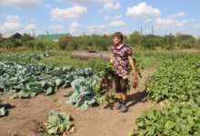 Каждый овощ в доход школы. Карталинские школьники летом время зря не теряли
