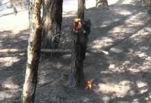 В Карталинском районе из-за жары горят леса