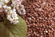 Южноуральское зерно, возможно, будут поставлять и для Китая