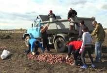 В Карталинском районе школьники  вырастили 22 тонны овощей