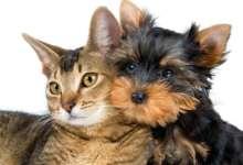 В России домашних животных планируют промаркировать