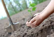 В лесах Карталинского района высадят новые деревья