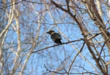 В Карталы возвращаются перелетные птицы