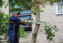 В карталинских дворах продолжают опиловку деревьев