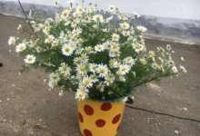 В Карталинском район отметили День семьи, любви и верности