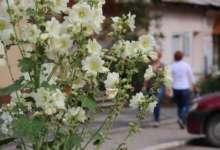 Карталинцы определяют осень по приметам