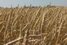 В Челябинской области осваивают необработанные земли
