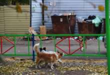 В Карталинском районе собаки вышли из убежищ