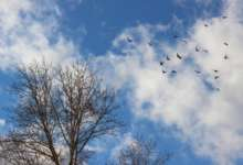 Карталинские метеорологи обещают ясную погоду
