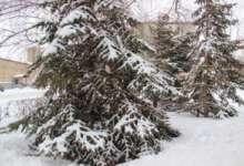 Зима пока не покинет Карталы