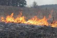 Рядом с Борцом лес горел