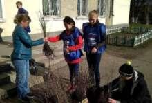 Карталинцы могут принять участие в озеленении города