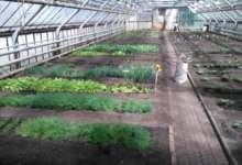 В Карталах теплица урожай дает