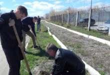 Карталинские полицейские посадили аллею