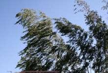 В Карталинском районе будет по-прежнему ветрено