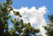 В Карталах будет солнечно, но ветрено