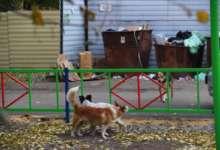 В Карталинском районе отлавливают собак