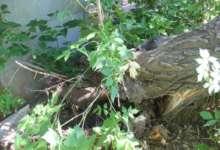 В Карталах упало дерево