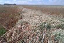 Сенокос идет неплохо, но травы мало