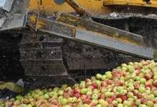 В Локомотивном, на мусорном полигоне уничтожили 20 тонн яблок
