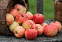 Карталинцы празднуют Яблочный Спас