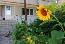 В Карталы возвращается лето