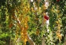 Карталинские метеорологи пугают заморозками