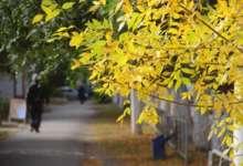 В Карталинском районе возможны заморозки