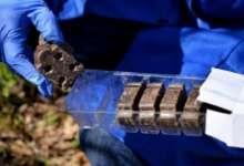 В карталинских лесах зверей вакцинируют