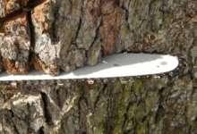 Карталинца подозревают в незаконной рубке деревьев