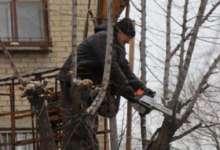 В Карталах выбрали подрядчика на обрезку деревьев