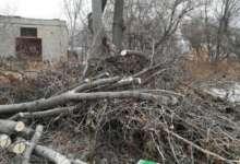 Поваленное дерево в Карталах убрали