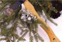 В Карталинских лесах усилена охрана елок