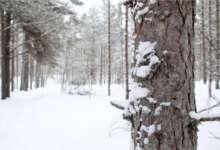 Житель Карталинского района замерз в лесу