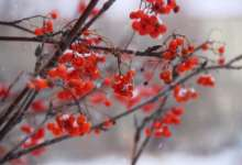 В Карталах синоптики снова снег обещают