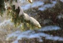 Ночью в Карталах ожидается снегопад