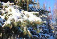 В Карталах возможен снег