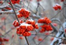 Больших морозов карталинские метеорологи не обещают